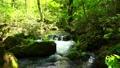 新緑の八甲田山蔦沼周辺 40834591