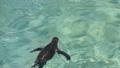 東京のペンギン 40841702