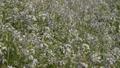 多摩川の花 40842148