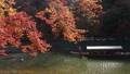 11月秋 紅葉の嵐山保津川を遊覧する屋形船 40927981