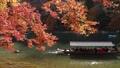 11月秋 紅葉の嵐山保津川を遊覧する屋形船 40927982