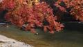 11月秋 紅葉の嵐山保津川を遊覧する屋形船 40927983