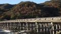 togetsu bridge, maple, yellow leafe 40927985