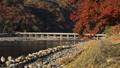 11月秋 紅葉の嵐山渡月橋の朝  京都の秋景色 40927986