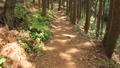 林道を歩く 41015608