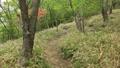 山の中を歩く 41015611