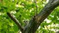 นกฮูกนกฮูกที่หงุดหงิดกับหน้าตาน่ารักที่ล้อมรอบไปด้วยสีเขียวสด 41072824