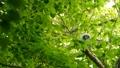 ล้อมรอบด้วยสีเขียวสดนกฮูกของนกฮูกใบบนกิ่ง 41072826