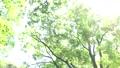 ต้นไม้,ป่า,แสงอาทิตย์ส่องผ่านใบไม้ 41113228