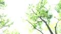 ต้นไม้,ป่า,แสงอาทิตย์ส่องผ่านใบไม้ 41113230