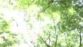wood, forest, sunshine filtering through foliage 41113231