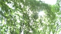 wood, forest, sunshine filtering through foliage 41113232