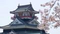 清洲城と桜 ズームバック 41240916