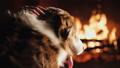 dog, pet, animal 41327946