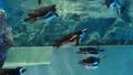 我像一隻企鵝在水中飛翔一樣游泳 41349162