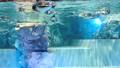 我正在看著企鵝從下面游過水面 41349163