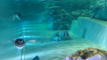 企鵝在水中游向這裡 41349164