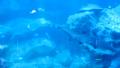 鯊魚正在水族館裡慢慢游動 41349165