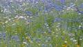 風にそよぐ野花 41356963