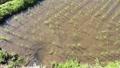 田植え後、上段から下段に流れる棚田の水。オタマジャクシが泳いでいます。 41420359