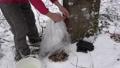Fixing plastic sack on spigot and maple tree trunk 41456847