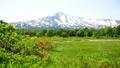鳥海山と桑の木台のレンゲツツジ 41458126