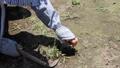 草むしり 41520088