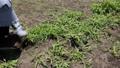 草むしり 41520089