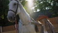 Pretty female teen ceressing friendly white horse on an area. FullHD 41553354