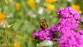 蝴蝶 昆虫 虫子 41669205