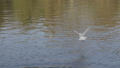 White gulls fly over the water, slow motion 41708655