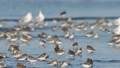 นก,ประเทศญี่ปุ่น,ธรรมชาติ 41768742