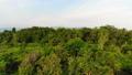 ป่า,ภาพถ่ายทางอากาศ,อากาศ 41831942
