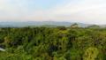 ป่า,ภาพถ่ายทางอากาศ,อากาศ 41831943