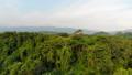 ป่า,ภาพถ่ายทางอากาศ,อากาศ 41831945