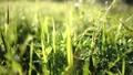 風で揺れる草花 41847689
