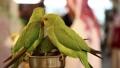 Parrots in bird market, Doha, Qatar 41873260