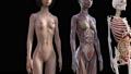 肌肉發達 肌肉 解剖學 41890965