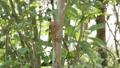 蜥蜴 动物 爬行动物 41894791