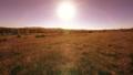 ภูมิทัศน์,ภูมิประเทศ,พื้นหญ้า 41938471