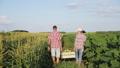 トウモロコシ コーン とうもろこしの動画 42077109