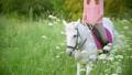 まきば 牧草地 馬の動画 42111893