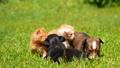 animal kitten puppy 42213398