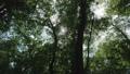 신록의 나뭇잎 사이로 비치는 햇빛 42259529