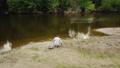 餌 川岸 釣り人の動画 42328060
