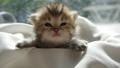 动物 猫 猫咪 42382726