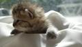 动物 猫 猫咪 42382728