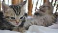 동물, 고양이, 새끼 42382881