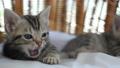 동물, 고양이, 새끼 42382884