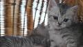 동물, 고양이, 새끼 42383048